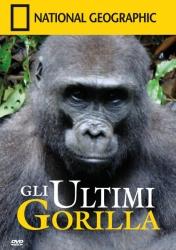 Ultimi gorilla